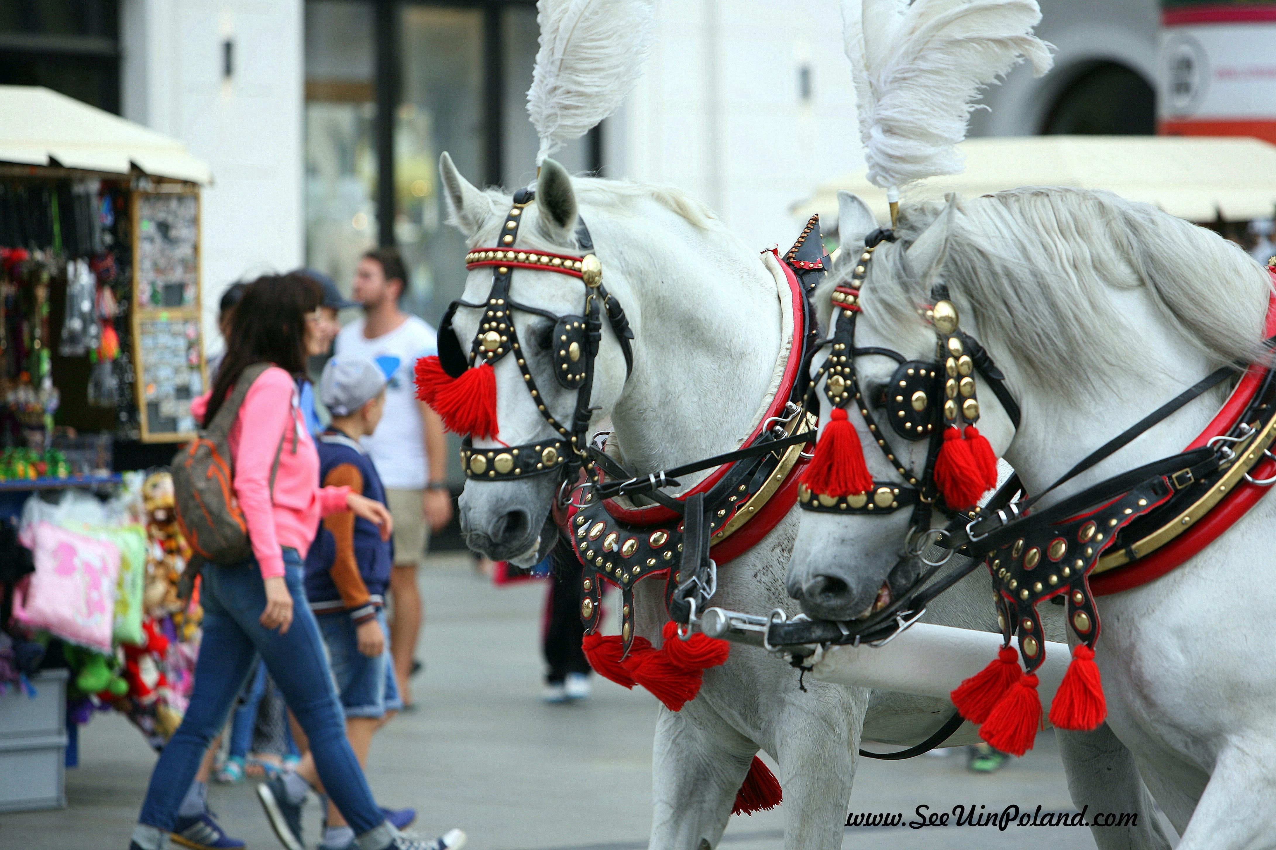 Wystrojone konie też się lekko nudzą.