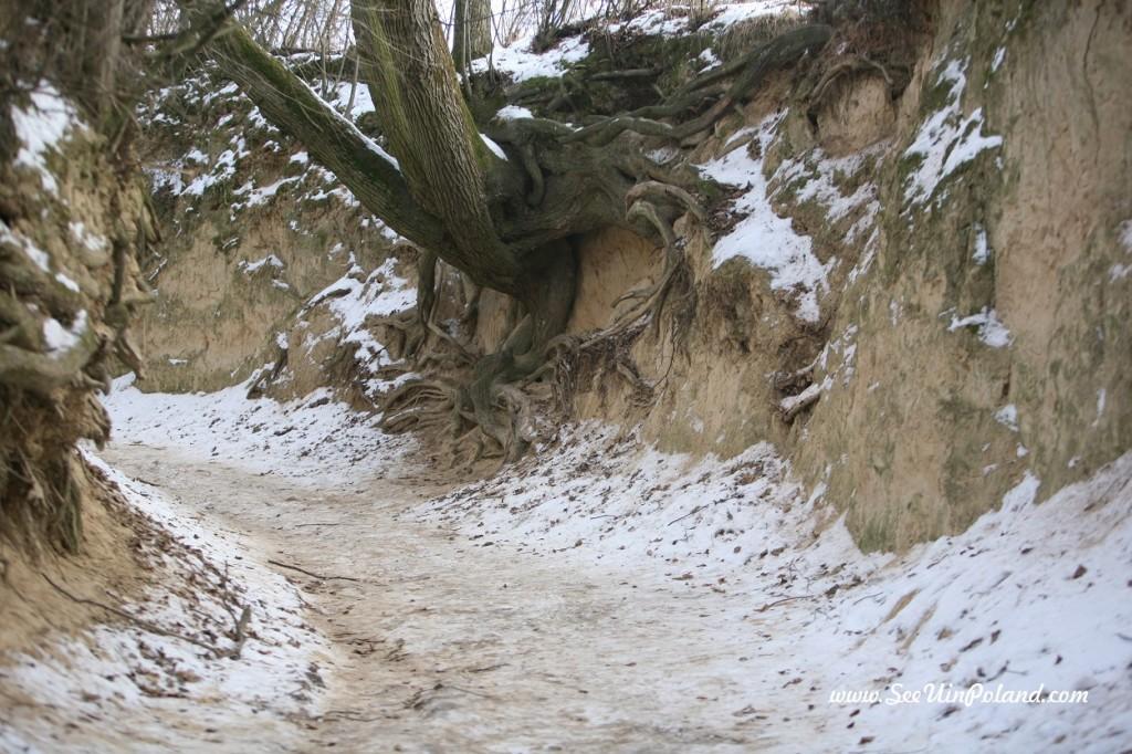 Kazimierz Dolny wąwóz korzeniowy dół
